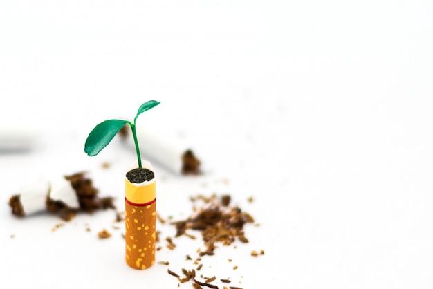Planta jovem em cigarros no fundo branco