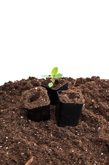 Planta jovem isolada no branco