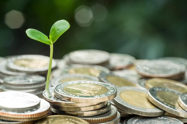 Planta jovem na pilha de moedas