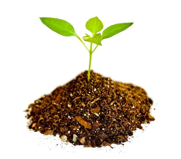 Planta jovem nas superfícies brancas