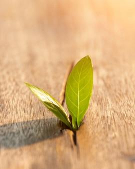 Planta jovem que cresce passo no jardim com luz solar