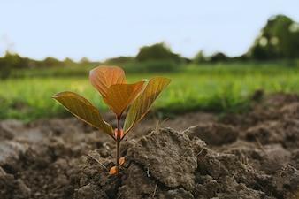 Planta jovem verde crescendo no solo em fundo de natureza