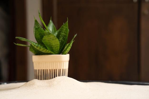 Planta laurentii em vaso de cerâmica contra fundo de madeira.