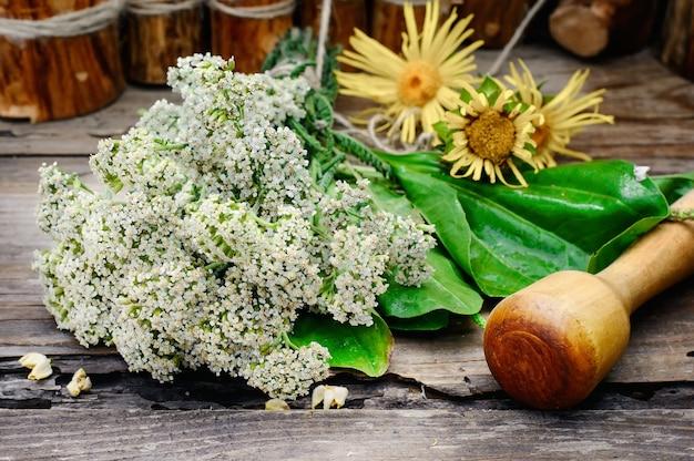 Planta medicinal de bush