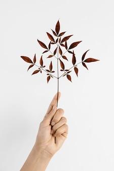 Planta mínima abstrata com folhas vermelhas ajudando na mão
