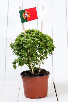 Planta mínima ocimum