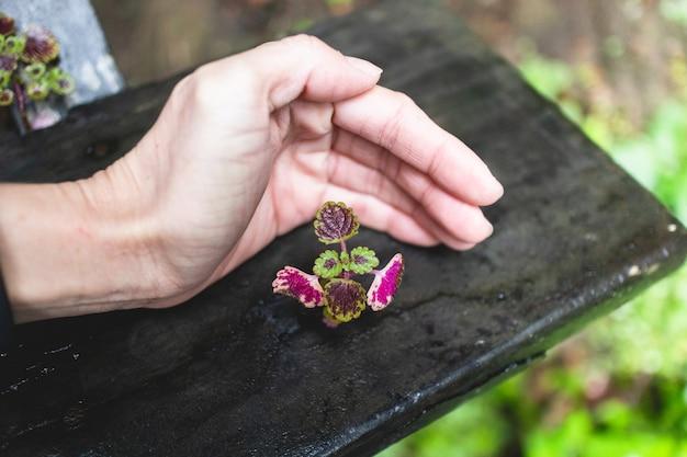 Planta minúscula pequena com proteção da mão humana. conceito de crescimento e suporte.
