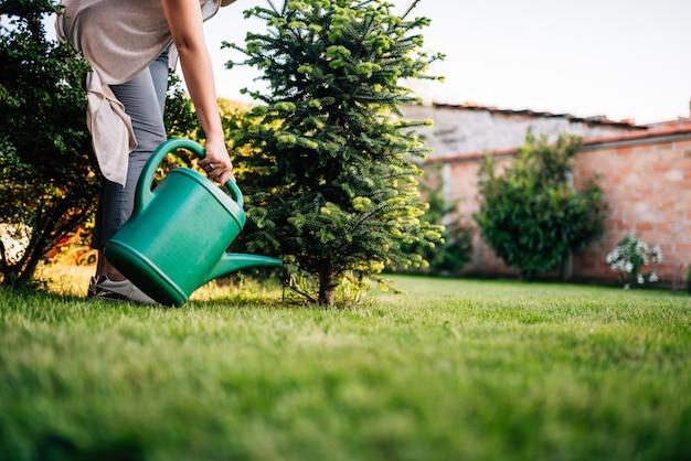Planta molhando ao ar livre.