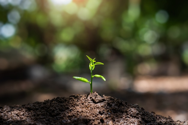 Planta, mudas crescem no solo com a luz do sol. plantando árvores para reduzir o aquecimento global.