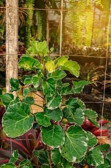 Planta ornamental no jardim da natureza com raio de luz.