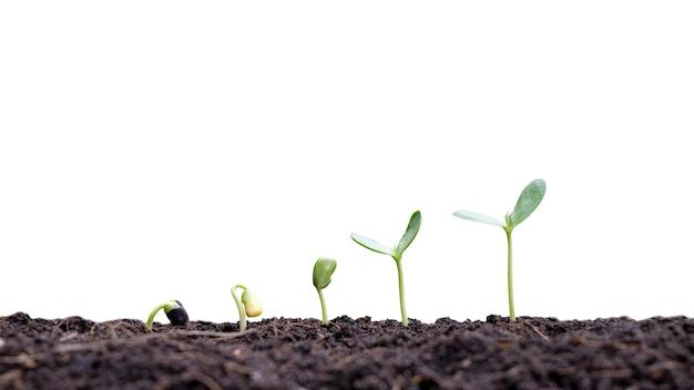 Planta pequena crescendo no solo em um fundo branco.