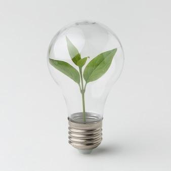 Planta pequena dentro da lâmpada
