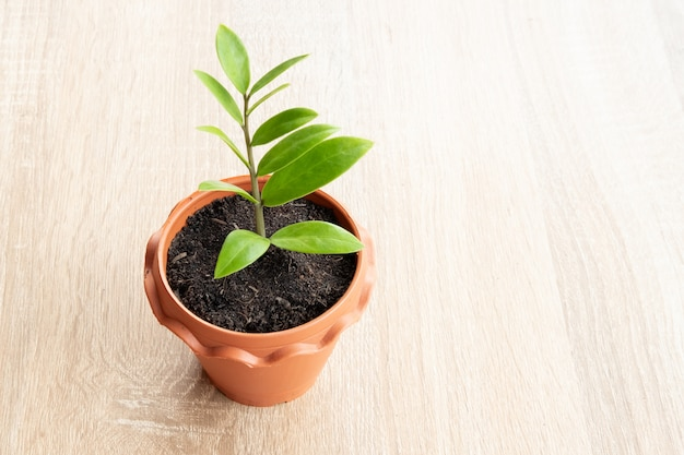 Planta pequena em um pote marrom