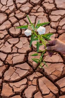 Planta pequena flor crescendo em solo seco com fundo de mão