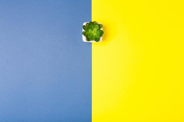 Planta pequena no fundo azul e amarelo brilhante do contraste. espaço de cópia livre. conceito criativo mínimo.