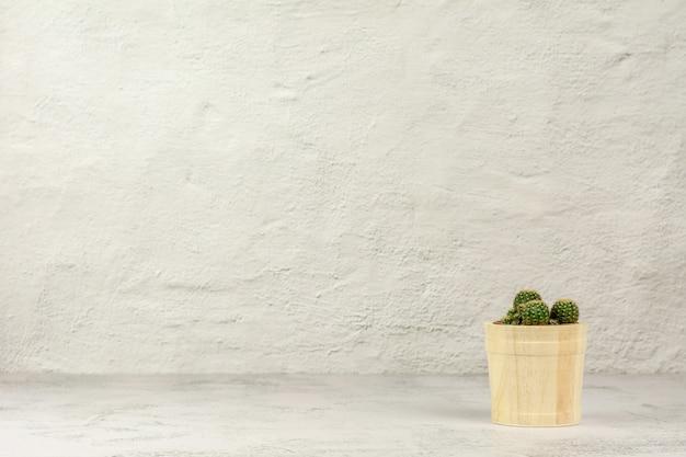 Planta pequena no pote de madeira.