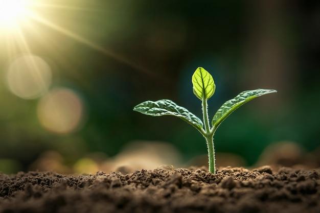 Planta pequena que cresce na luz da manhã no jardim. dia da terra do conceito