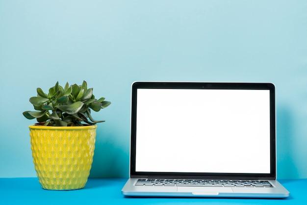 Planta perto do laptop
