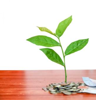 Planta que cresce de moedas
