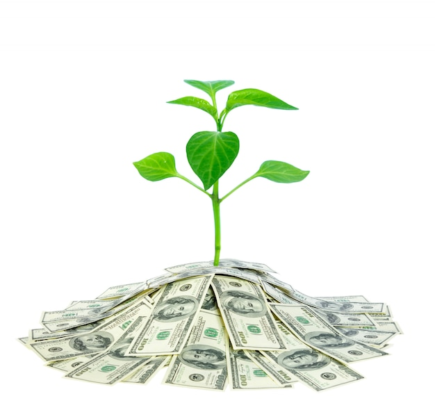 Planta que cresce em dinheiro