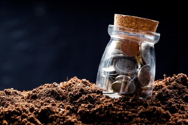Planta que cresce em moedas de poupança - investimento e conceito de interesse