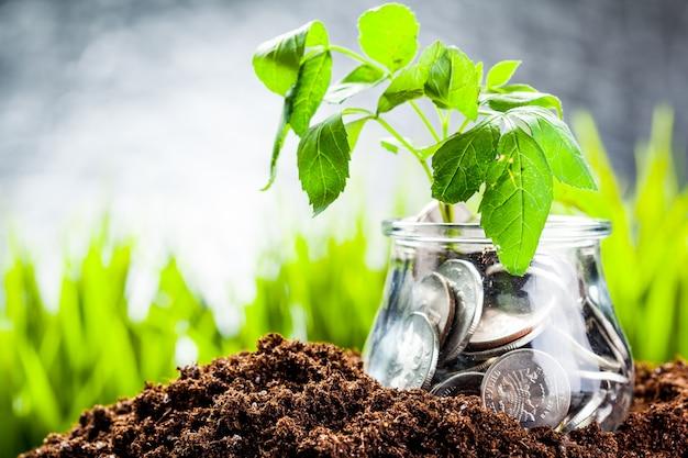 Planta que cresce em moedas de poupança - investimentos e juros