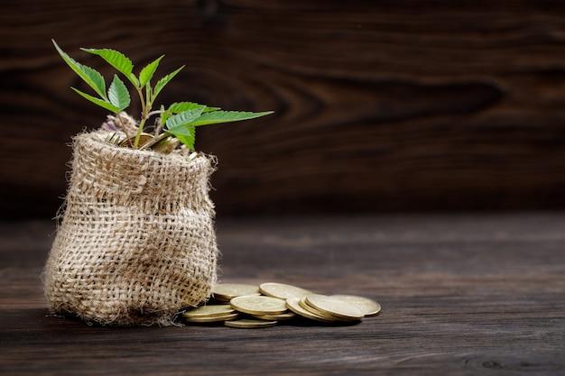 Planta que cresce em saco de moedas por dinheiro
