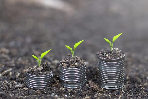 Planta que cresce na pilha da moeda do dinheiro. financiar o desenvolvimento sustentável
