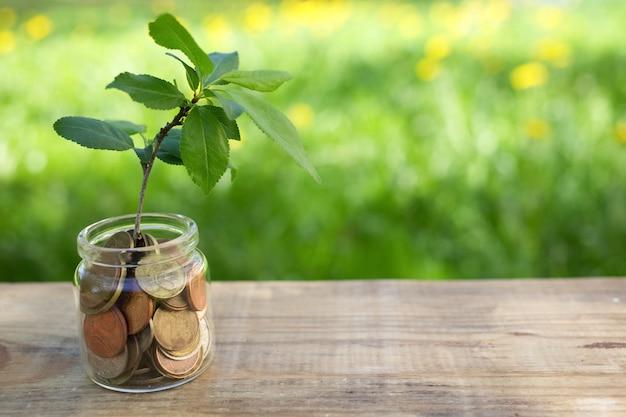 Planta que cresce no frasco de vidro de moedas