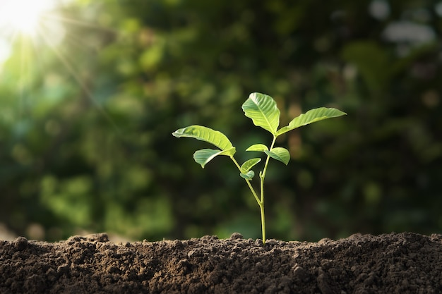 Planta que cresce no solo com luz do sol. conceito de dia da terra de eco
