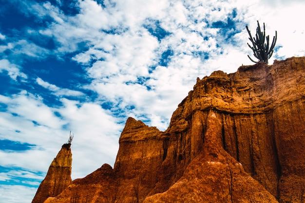 Planta selvagem exótica crescendo nas rochas do deserto de tatacoa, na colômbia, sob o céu azul
