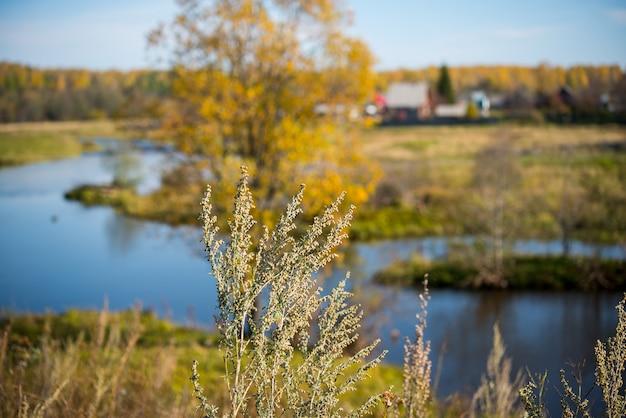 Planta selvagem na paisagem de outono, belas vistas da natureza e do rio, foco seletivo