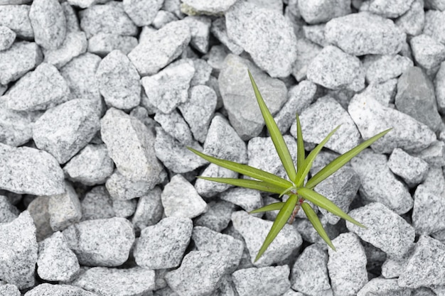 Planta selvagem solitária na pedra esmagada.