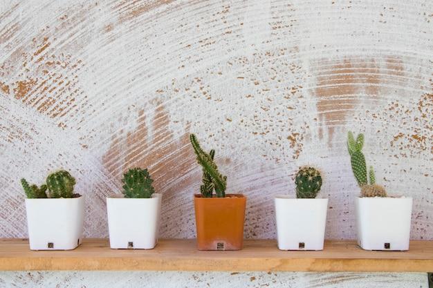 Planta simples de cacto em vaso de flores decorar na prateleira em casa