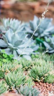 Planta suculenta do cacto em um jardim.
