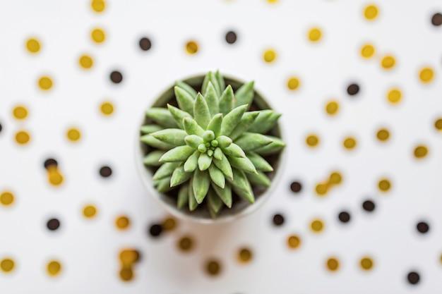 Planta suculenta em pé de panela na mesa branca com confete