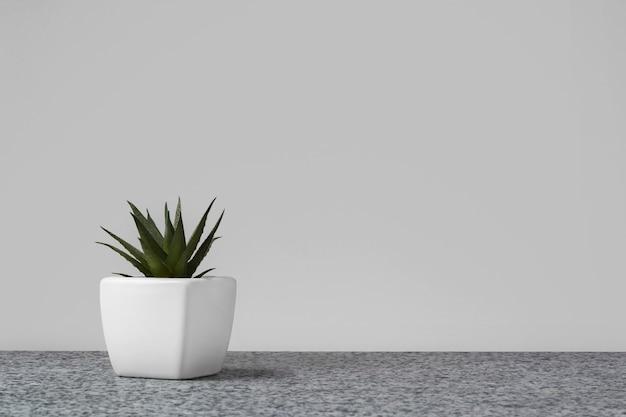 Planta suculenta em pote branco na superfície de mármore contra o fundo da parede cinza. composição floral interior.