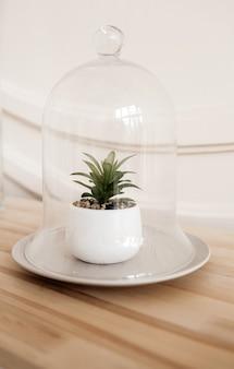 Planta suculenta em uma panela sob o vidro.