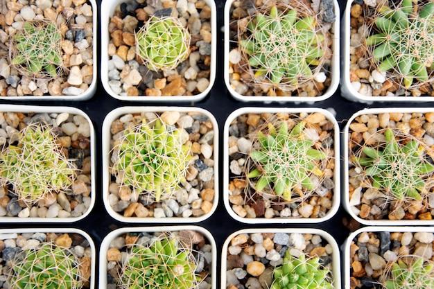 Planta suculenta mista em vista superior do pote