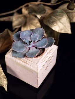 Planta suculenta no vaso de madeira roxo e folhas douradas isoladas em acrílico preto