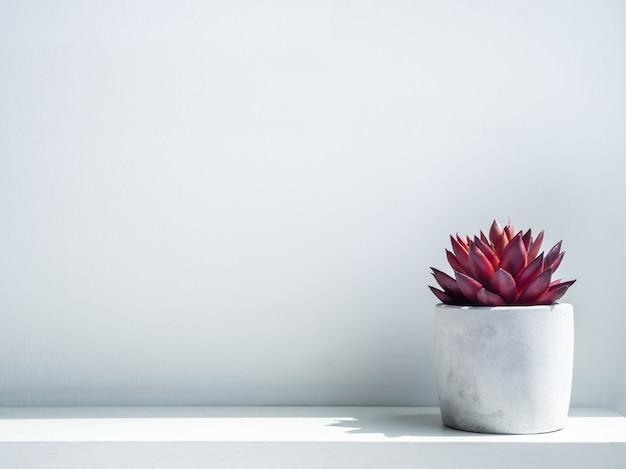Planta suculenta vermelha em um plantador de cimento geométrico moderno na prateleira de madeira branca na parede branca