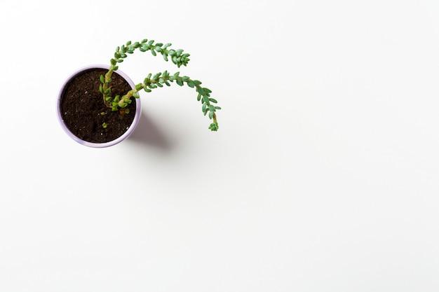 Planta suculentas no fundo do potenciômetro