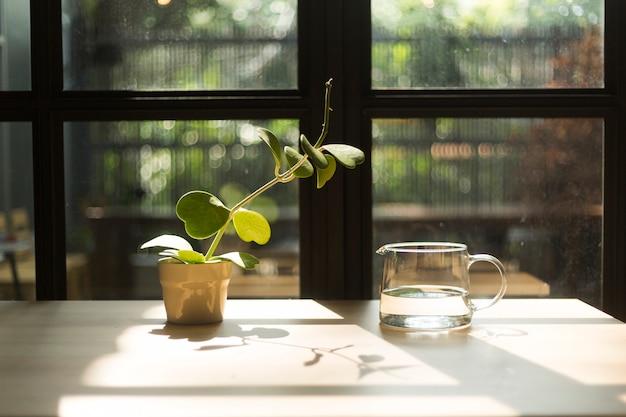 Planta tentando obter água em jarra de vidro