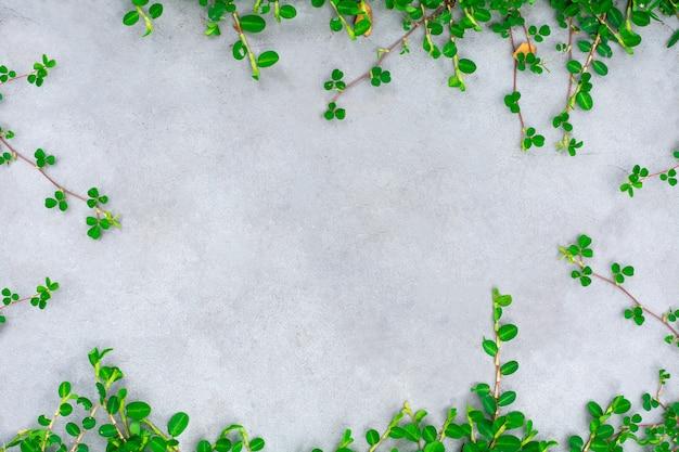 Planta trepadeira verde na parede de cimento. - com espaço para texto.