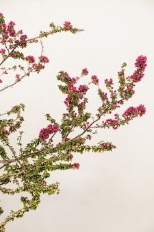 Planta tropical com flores vermelhas na parede bege