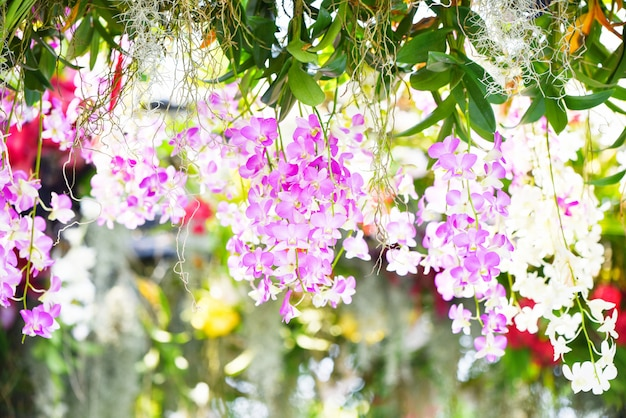 Planta tropical linda orquídea rosa e roxa flor