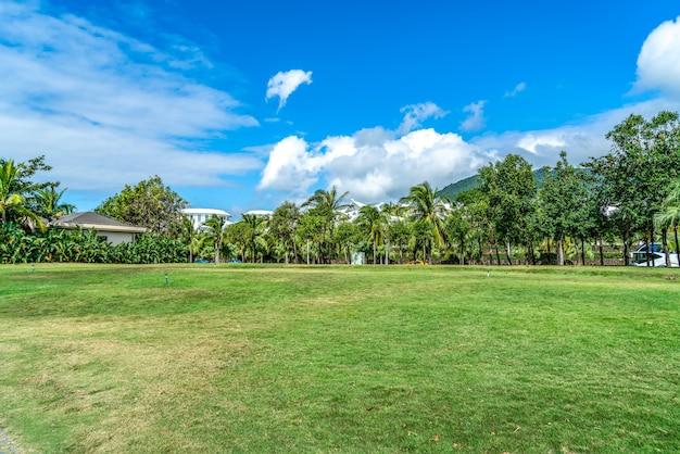 Planta tropical palmeira verde