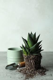 Planta, vaso e pá de jardim em mesa texturizada cinza