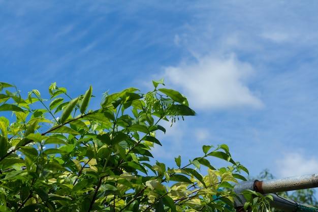 Planta verde contra o céu azul