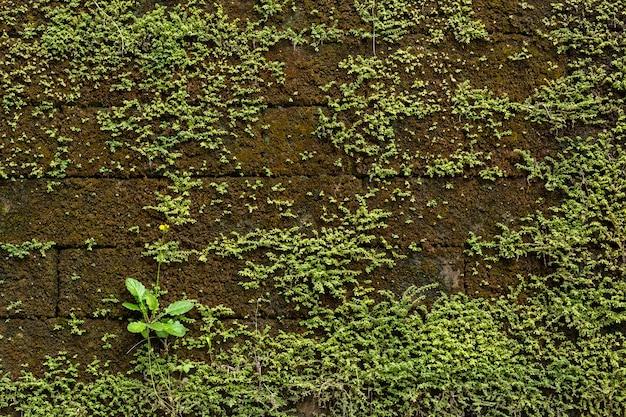 Planta verde e musgosa na parede velha